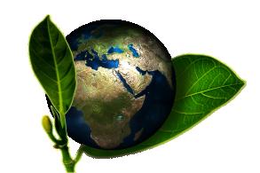 Eveil écologique